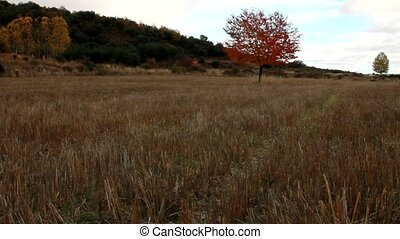 A red tree in a field
