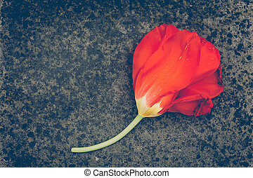 a red tulip on a grey stone