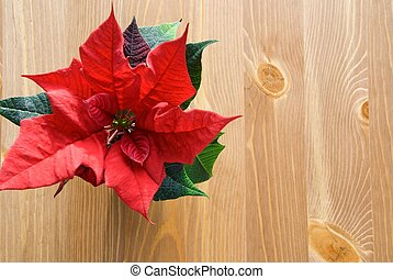 a red winter rose on wood