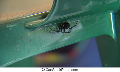 A redback spider hiding on a lawn chair - A redback spider...