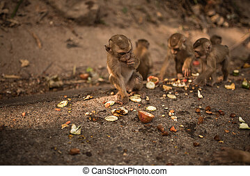 A redhead monkey sits on the ground and eats