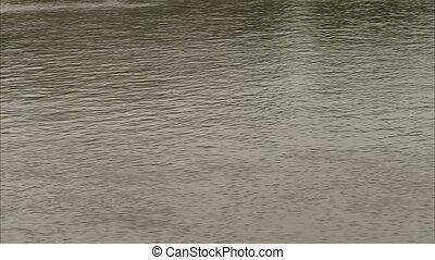 A relaxing stream shot - A medium steady shot of a stream in...