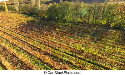 a relaxing sunny autumn landscape with fields, vineyards and...