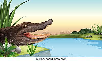 A reptile near the river