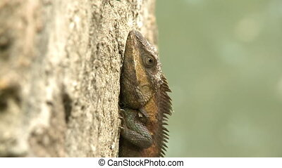 A reptile on a wall - An extreme close up shot of a brown ...