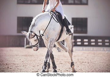 A rider in white sits in a black saddle on a dappled white horse, which, standing in the sandy arena, bowed its head.