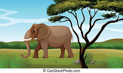 a, riesig, elefant
