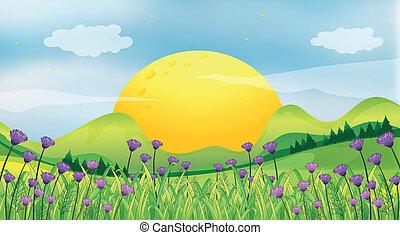 A rising sun - Illustration of a rising sun