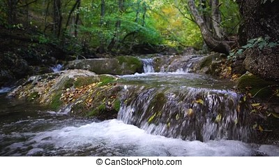 A river flows through the pristine beauty of a green european wood forest