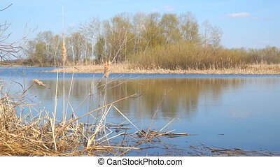 A river or a small lake in early spring. The grass appears ,...