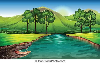a, rivière, à, une, alligator
