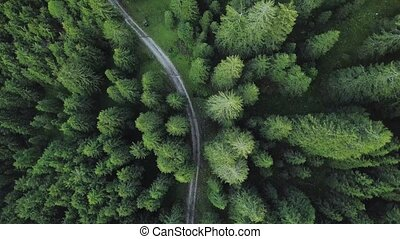 A road discovered among the green trees of the forest from above
