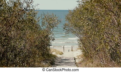 A road paved with wood is leading through the high bush to the seashore.
