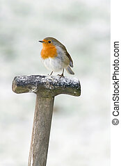 A Robin perched on a fork handle in the snow
