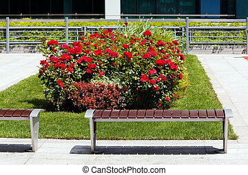 a rose bush in the park