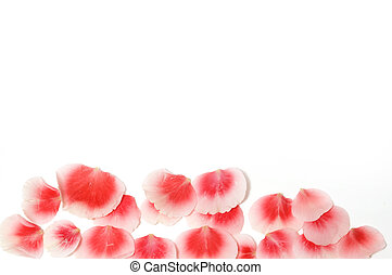 rose petals  - a rose petals on a white background