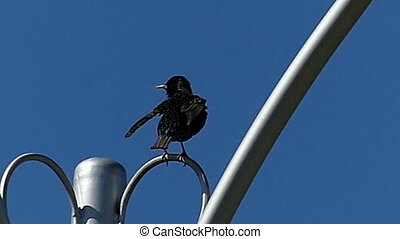 A rough rook sits on a curvy stick fixing a streetlamp in...