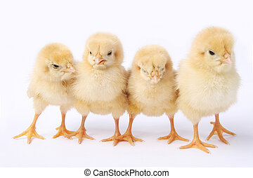 a row of chick