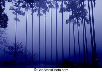 A row of coconut trees in the fog
