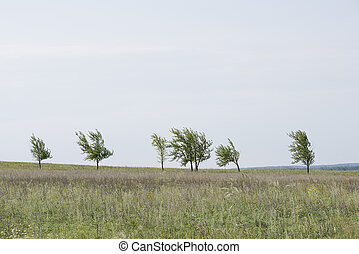 A row of lonely small trees on a green hill