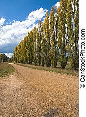 A Row of Poplars
