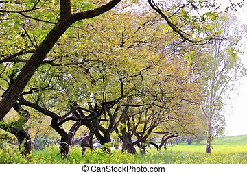 a row of trees in the park