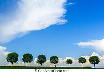 Row of trees under the gloomy sky. seven tree in a line