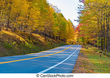 A rural highway through a forest in the fall