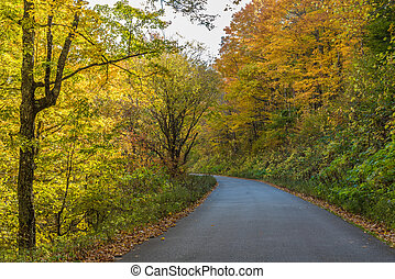 A rural road through a forest in the fall