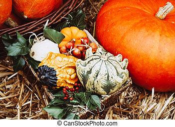 A rustic autumn still life with pumpkins.