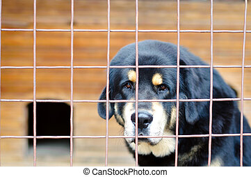 dog in the cage