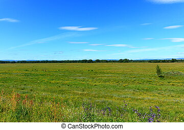 summer landscape of the steppe Khakassia