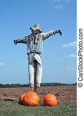 Scarecrow and pumpkins - A Scarecrow and pumpkins on a farm ...