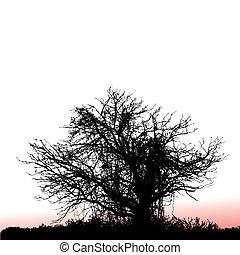 tree seen at sunset