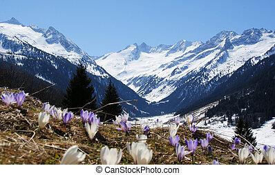 a, schöne , berglandschaft, mit, a, blume, wiese, in, der, vordergrund.