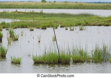 a, schöne , landschaftsbild, von, a, see, mit, grasbedeckt, shores.