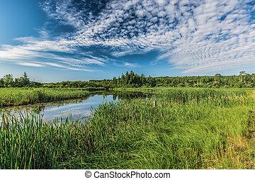 a, schöne , landschaftsbild, von, der, natur
