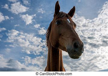 a, schöne , rotes pferd