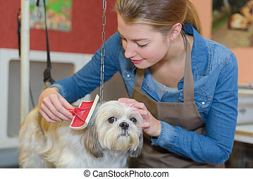 a schedule to the pet salon