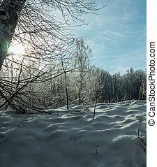 a, schispur, in, verschneiter , winter, foresttrees, und, büsche, bedeckt, mit