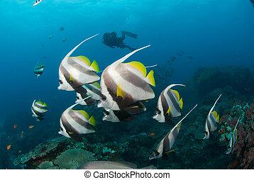 A school of beautiful tropical fish