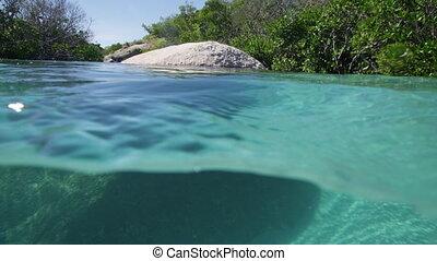 A school of fish between big rocks and mangroves - A...