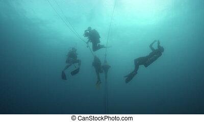 A school of fish dancing underwater