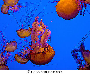 A school of jellyfish offer a real threat to swimmers