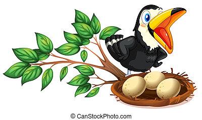 a, schwarzer vogel, aufpassen, der, nest, mit, eier