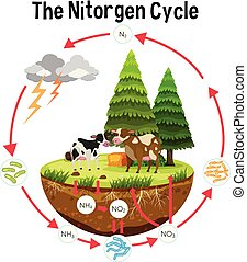 A Science Poster of Nitrogen Cycle