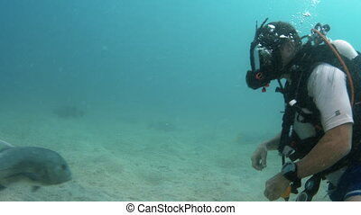 A scuba diver observing underwater life - A shot underwater...