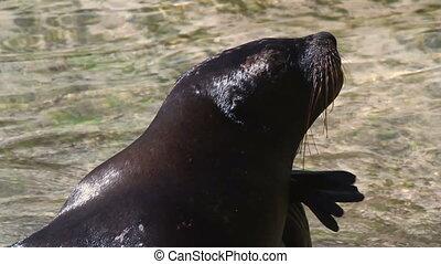 a sea lion in the sea