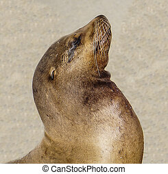 A Sea Lion on the Coast