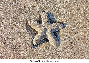 a sea star on the beach